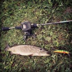 Как правильно ловить щуку на спиннинг в наших реках?