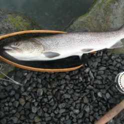 Рыба Сахалина: фото и описание. Рыбалка на Сахалине