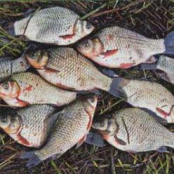 Рыбалка в мае на карася. Как сделать соску на карася