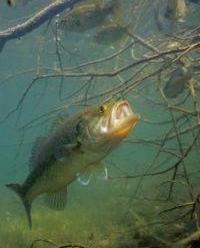 Отдых и рыбалка во Владимирской области: отзывы