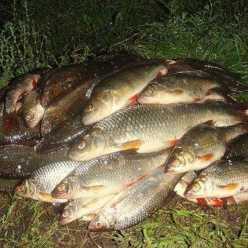 Рыбалка в Могилеве: прогноз клева и удачные места для ловли