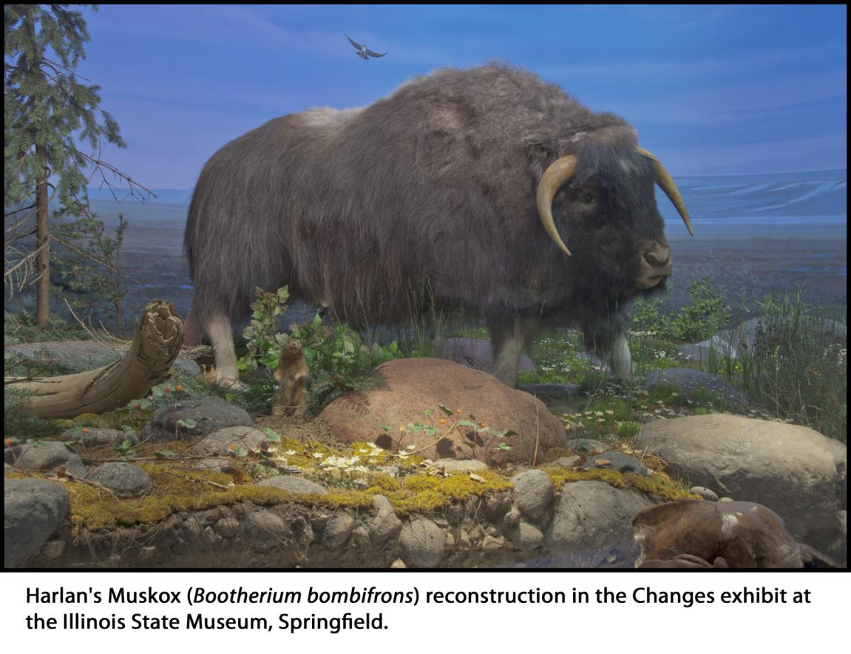 Image result for Bootherium bombifrons