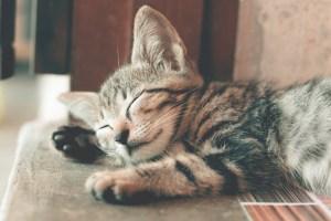 睡眠をとる猫の画像