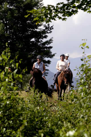 Treks |Vermont Horse Farm & Vacation Rental in Fayston, Vermont
