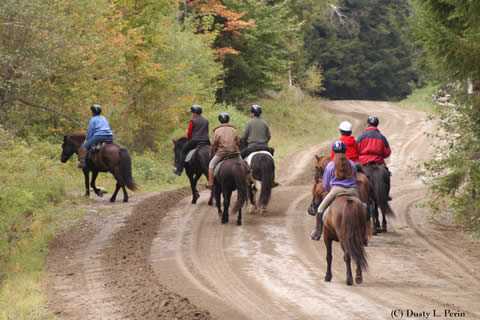 Treks | Vermont Horse Farm & Vacation Rental in Fayston, Vermont