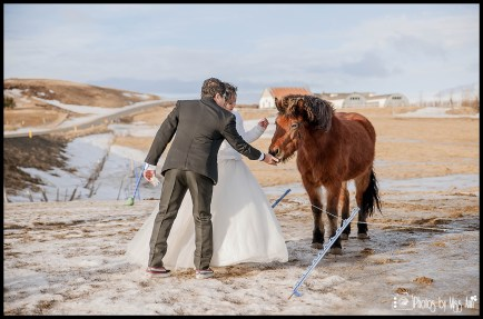 bride-and-groom-with-icelandic-horses-photos-by-miss-ann