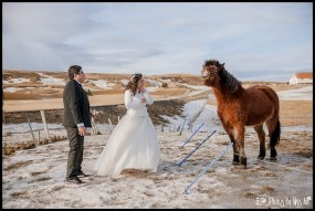iceland-wedding-icelandic-horses-with-the-bride-and-groom