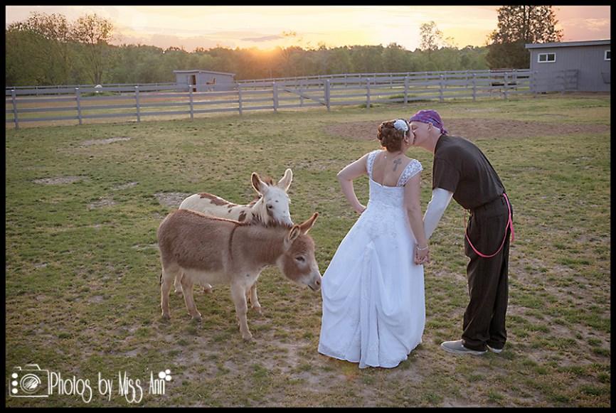 Donkey Photo Bomb at Eyry of the Eagle Farm Wedding