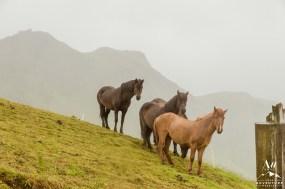 Iceland Wedding - Iceland Horses