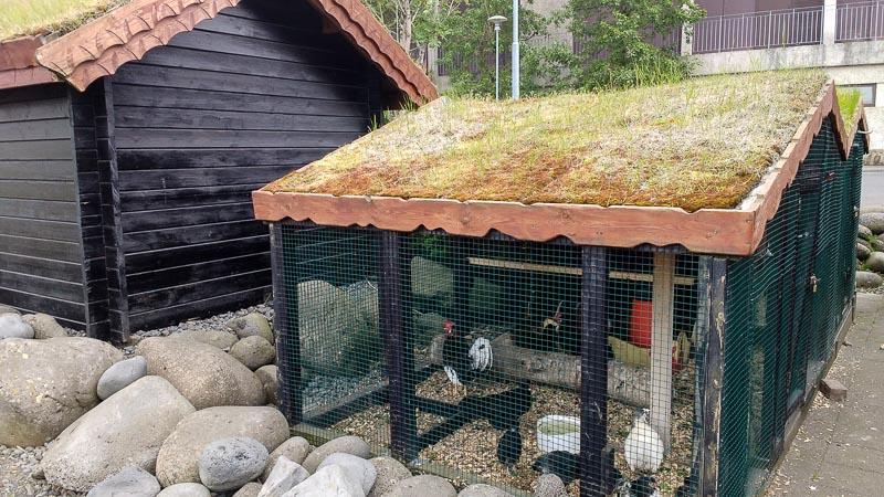 Hafnarfjörður viking hotel chickens