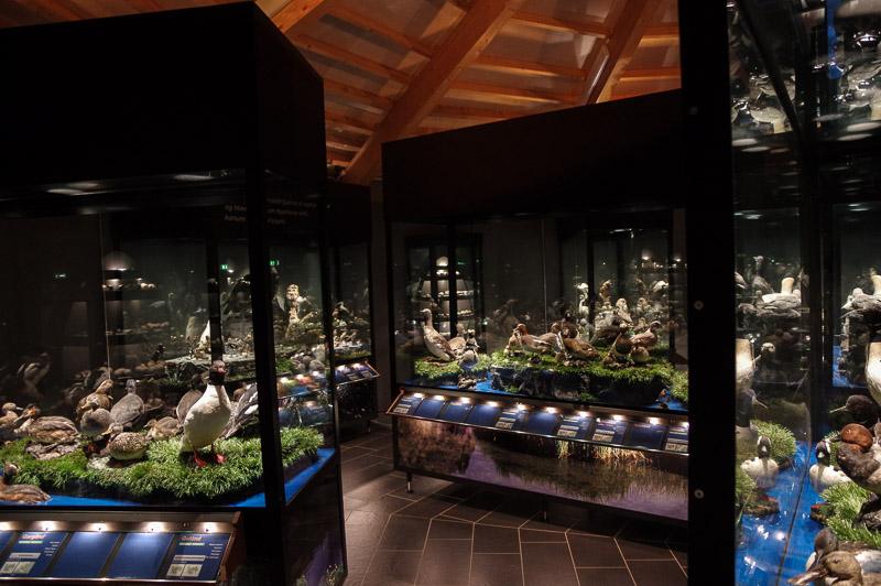 Sigurgeirs Birds Museum (1 of 1)