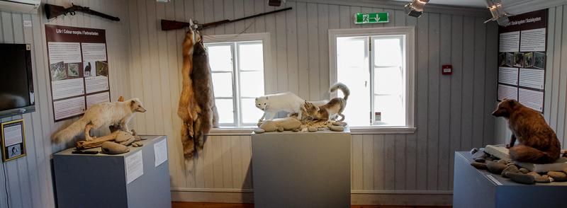 sudavik arctic fox museum