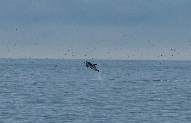 Saturday July 23 Update Part 2 Reykjavik Sailors Whale