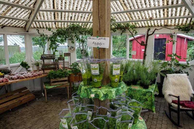engi farm market