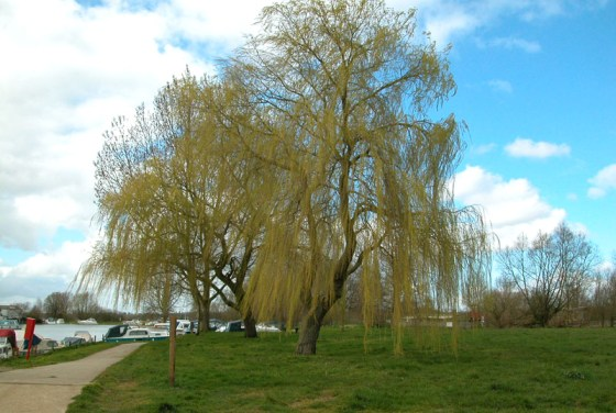 beccles-quay-willow