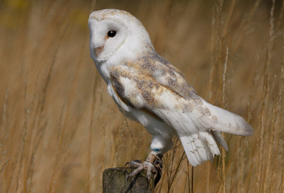 Suffolk-Owl-Sanctuary-1