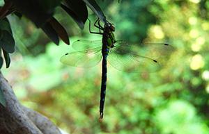 dragonfly-1-560x361