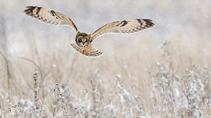 rspb-bird watch