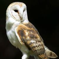 Suffolk Community Barn Owl Project