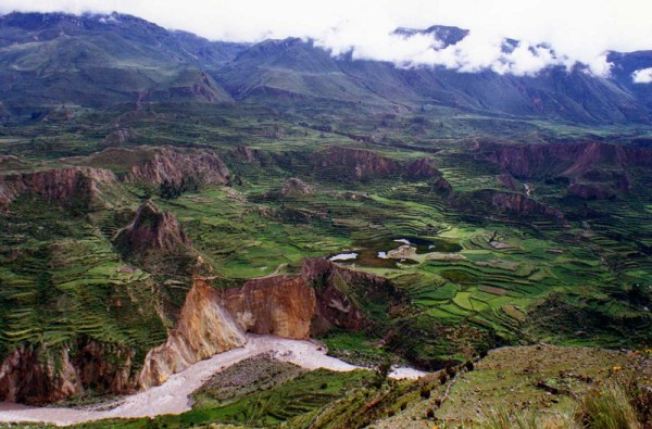 Terraces along Colca Canyon
