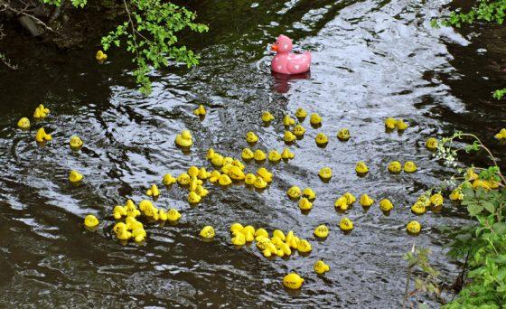 Wymondham Abbey Duck Race