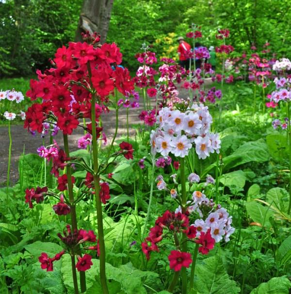 Fairhaven Garden Candelabra Primula Tours