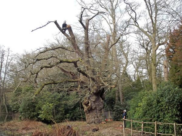 Guided Tree Walk