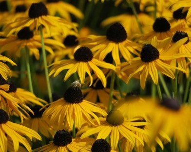 National Garden Scheme is running its second annual photography competition