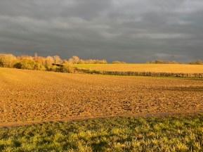 January 2021 Late winter sun in the waveney valley - 3