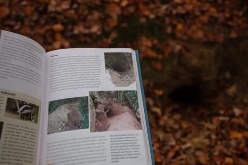 Fährten lesen Spuren suchen-4