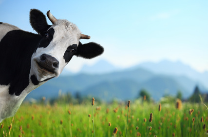 Die Kuh-Meditation in der Ngöndro-Praxis
