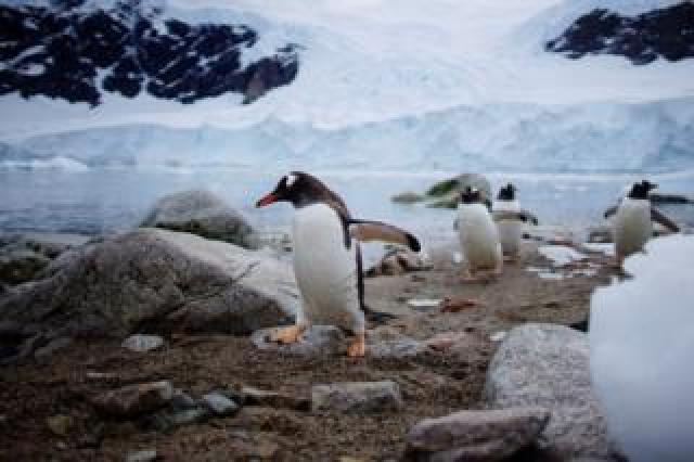 گلیشیئر پنگوئن
