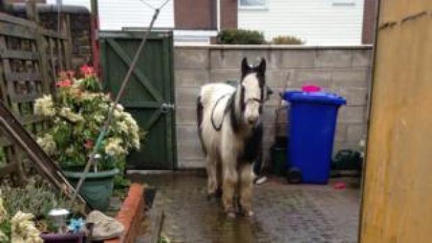 Mr Melvin Andrews, dumped in the garden