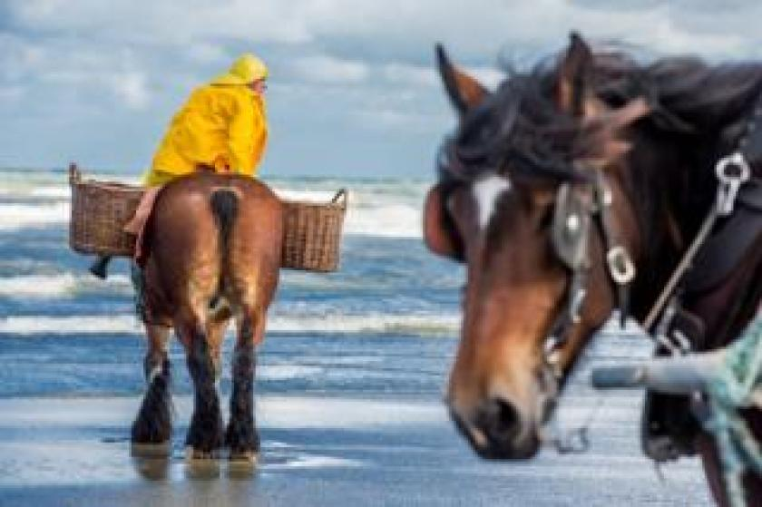 A fisherman with a yellow coat sits on his horse.