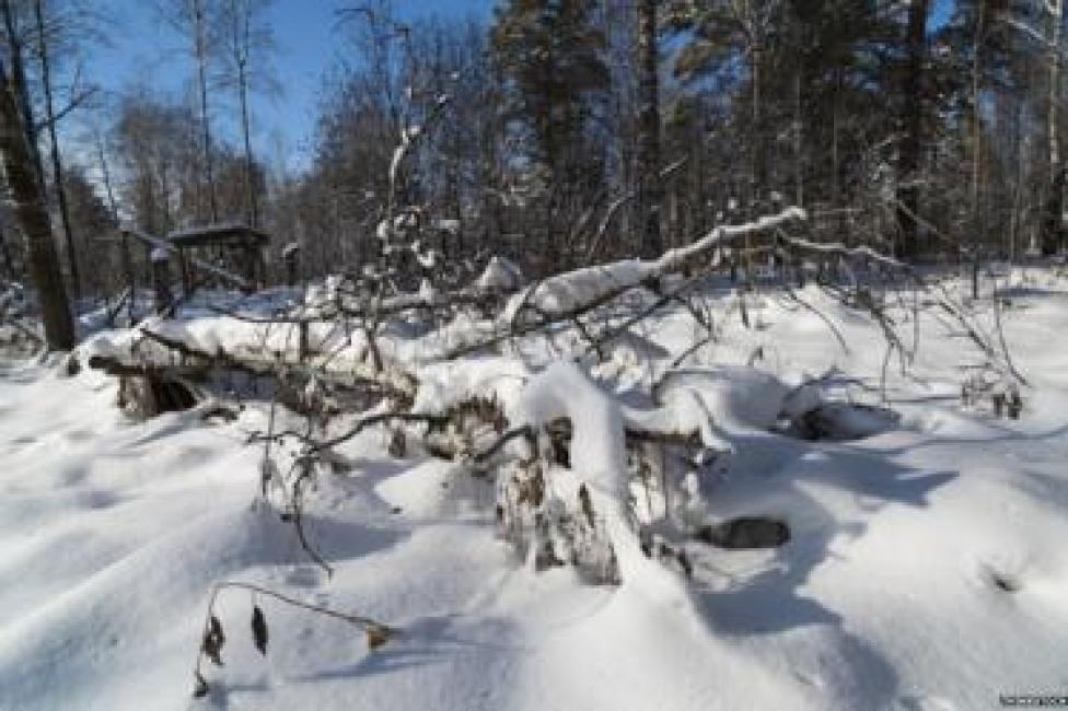 Nieve en Siberia