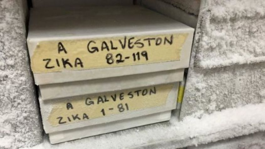 Zika samples in a freezer in a lab