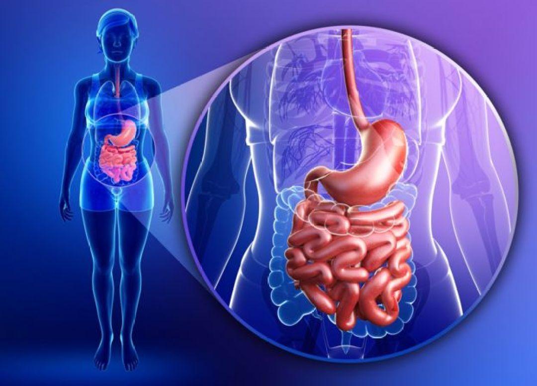 Gráfico del aparato digestivo del ser humano
