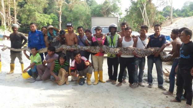 Construction workers with snake