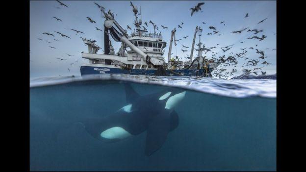 Ballena y barco en los mares de Noruega