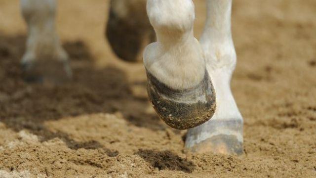 Pata de caballo