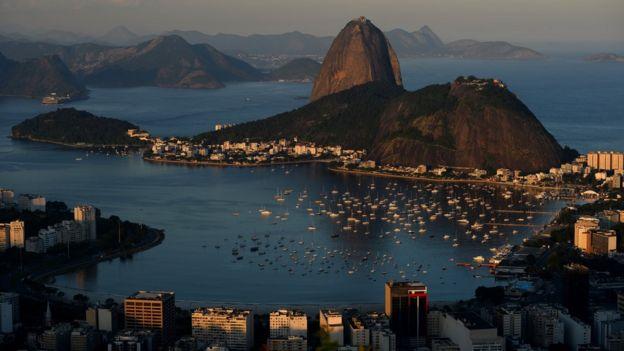Brasil le debe su nombre a un árbol.
