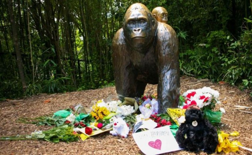 Flowers lay around a bronze statue of a gorilla and her baby outside the Cincinnati Zoo