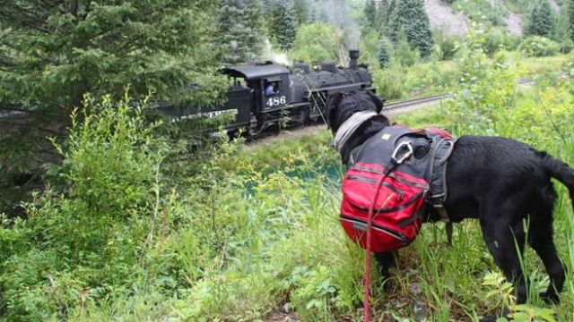 Tennille watching a steam train go by