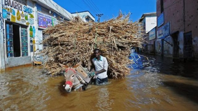 A man walks his donkey and its load through flooded streets Beledweyne, north of Mogadishu, Somalia - Thursday 26 May 2016
