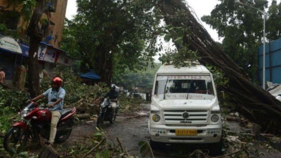 Árvore caída e destruição em área alagada