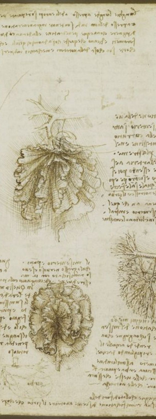 Boceto de Leonardo Da Vinci. Royal Collection Trust/© Her Majesty Queen Elizabeth II 2017