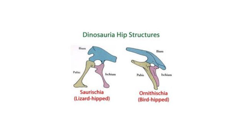 Dinosaur Hips