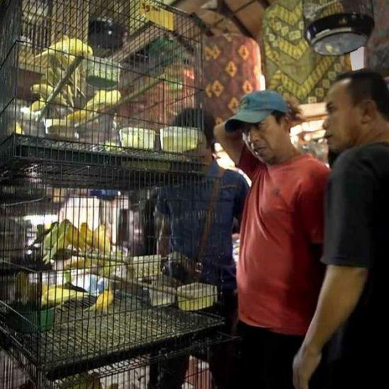 Hombres mirando aves en un mercado