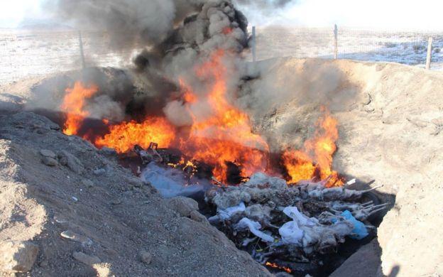 Saiga carcasses being burned (c) WCS