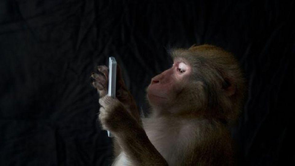 mono japonés usando un smartphone